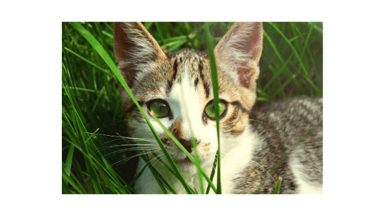 gato come hierba