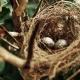 Nido. Cría de aves en cautividad