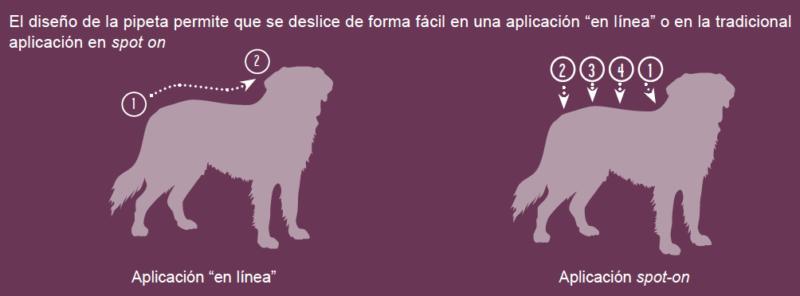 Cómo aplicar Vectra 3D pipetas antiparasitarias para perros